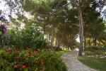 Anteprima pineta Masseria Fontanelle